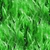 landscaping-grass-bg1.jpg